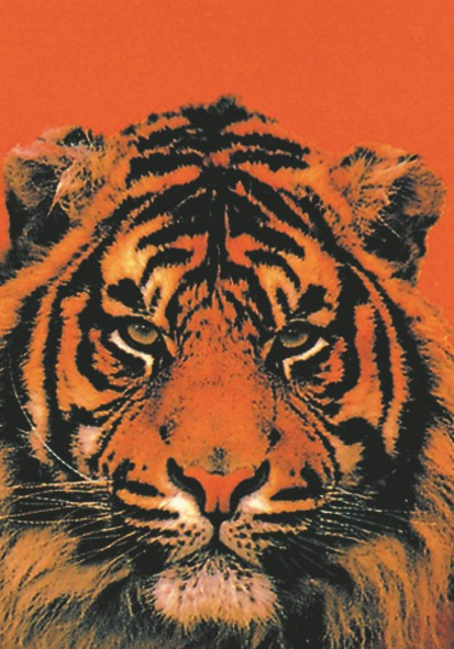 SALE FLAG TIGER